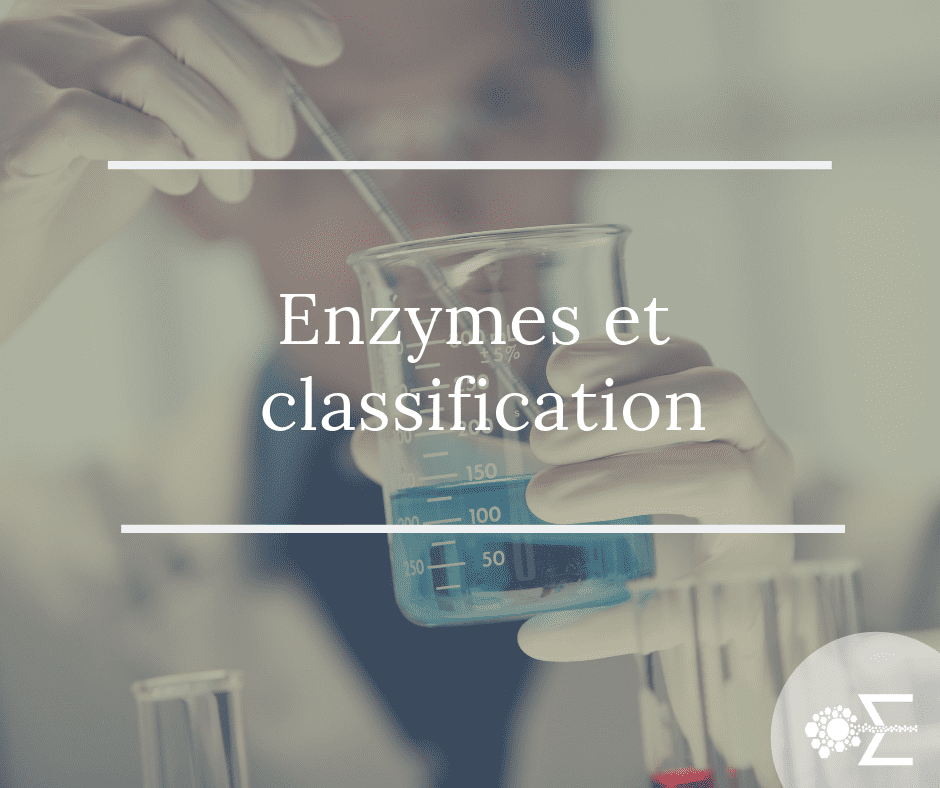 Enzymes et classification