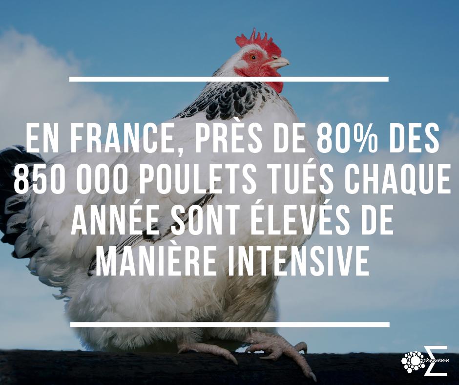 label poulet