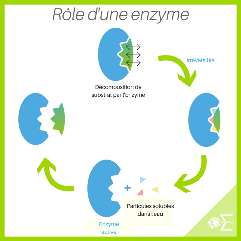 Role of an enzyme