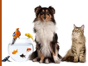 Produits nettoyants écologiques pour animaux